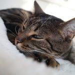 猫のくしゃみが治らない!試したい5つの対処法