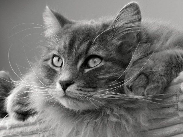 cat-1086330_1280