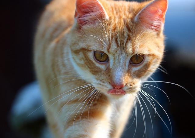 cat-1366244_640