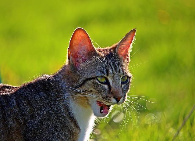 cat-1400598_640