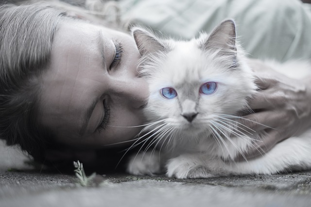 cat-1423844_640