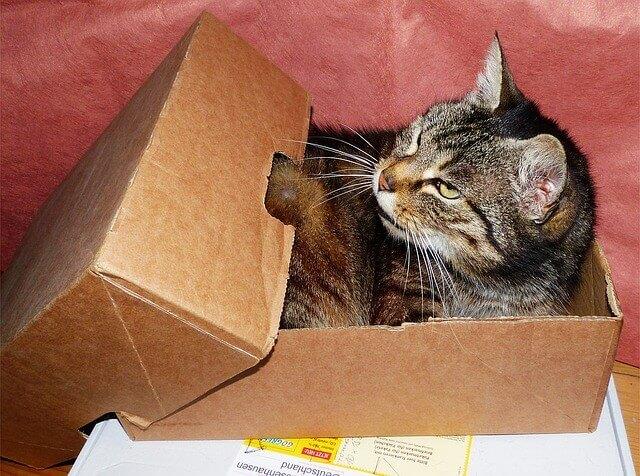 cat-1529520_640-1-1
