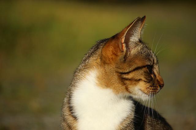 cat-1589369_640