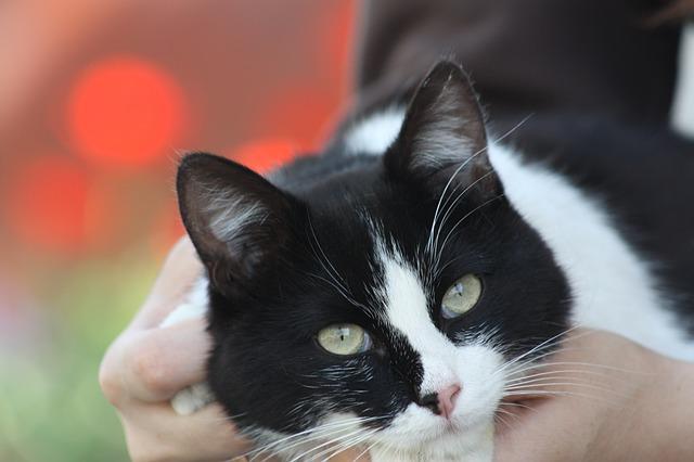cat-179608_640