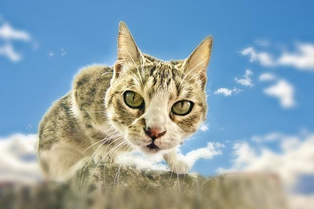 cat-218221_640