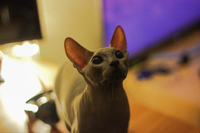 cat-656603_640