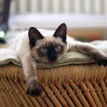 猫が便秘で嘔吐する理由は?原因と対処法をご紹介