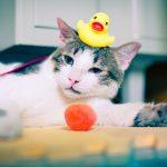 猫を一人暮らしのワンルームで快適に飼う方法!注意点は?