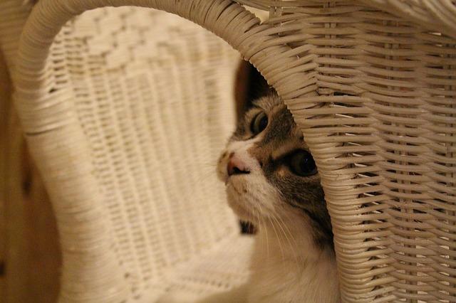 cat-966786_640