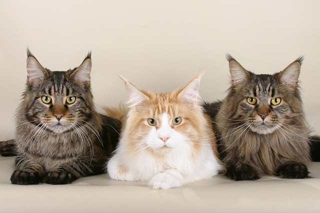 cats-535789_640