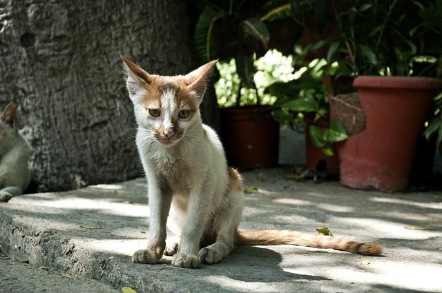 cats-61240_640