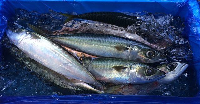 fish-1646782_640