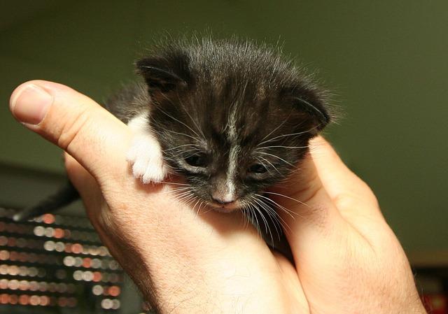 kitten-100691_640