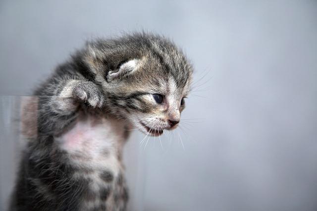 kitten-1047456_640