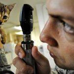 猫のおしっこの回数が少ない!出ない時の原因と対処法は?