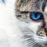 猫の目の色が変わる!病気が原因って本当なの?