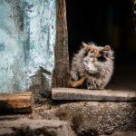 【ボサボサ】猫の毛並みは餌で良くなる?オススメのキャットフード10選