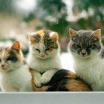 ふるさと納税で猫の殺処分ゼロへ!愛護活動に寄付できる自治体一覧