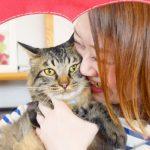 猫のペット保険ランキング!人気別で徹底比較【口コミ】