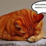 猫の便秘解消のマッサージ方法!おすすめのツボとは?