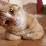 猫の風邪の薬!市販や通販で買えるおすすめ10選!