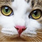 猫のエイズの症状!うつる心配はないの?