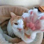 猫の爪を切りすぎた!血が出た場合の対処法とは?