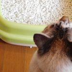 猫の膀胱炎!症状や原因・対処法までを詳しく解説!