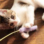 猫がおもちゃを持ってくる!本当の意味と接し方とは?