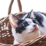 猫のベッドはどんなのが良い?おすすめ10選!