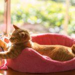 猫がゴロゴロをずっと言う時と言わない時の違いとは?