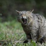 猫の咳は何が原因?症状別に対処方法を詳しくご紹介!