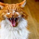 猫がブラッシングを嫌がる!原因は静電気にあるの?