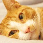 猫の顔が痙攣!原因&対処法は?病気の可能性はあるの?