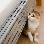 猫が顔を「すりすり」する気持ちは?どんな理由がある?