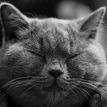 猫の涙が茶色いのは病気?原因・対処方法をご紹介!