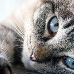 猫の熱中症の症状とは?原因と対処法をまとめてみた