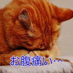 猫がチョコレートを食べた!毒性や致死量を徹底解説!
