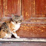 猫がドアを開ける!脱走を防ぐための対策とは?