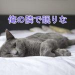 猫が布団の上で寝る理由とは?飼い主への気持ちの現れ?