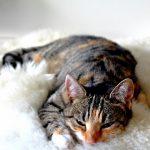 猫が吐く泡が白い原因は?病気の可能性はある?
