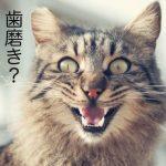 猫の歯磨きのやり方!嫌がる場合の3つのコツとは?