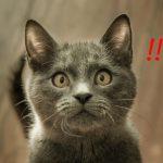 猫の飼い方!マンションで気をつけるべき10の事とは?
