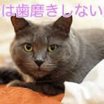 猫の歯磨き!おやつでおすすめ厳選10選!