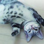 メス猫のお腹にしこり!考えられる病気とは?