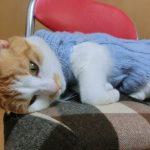 猫の腎臓病の治療とは?治療費はどれくらいかかる?
