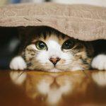 猫の便秘にはヨーグルトが効果的?与え方についても