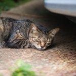 猫の寝言の原因とは?病気やストレスの可能性はあるの?