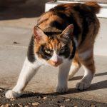 猫が病院で暴れる!大人しくさせるためのコツとは?