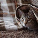 猫の癒しの効果!幸せになれる5つの理由とは?